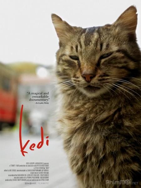 Thế Giới Loài Mèo Kedi.Diễn Viên: Kirsten Dunst,Charlotte Gainsbourg And Kiefer