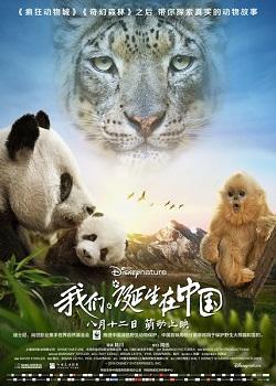 Cuộc Sống Hoang Dã Ở Trung Quốc Born In China.Diễn Viên: Xun Zhou,John Krasinski,Claire Keim
