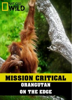 Nhiệm Vụ Cấp Bách: Đười Ươi: Trước Nguy Cơ Tuyệt Chủng Mission Critical: Orangutan On The Edge.Diễn Viên: Adam Driver,Mark Hamill,Carrie Fisher,John Boyega