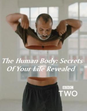 Những Bí Ẩn Về Cơ Thể Người - The Human Body Secrets Of Your Life Revealed