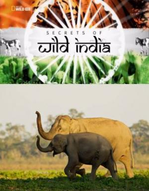 Bí Ẩn Thế Giới Hoang Dã Ấn Độ: Vương Quốc Loài Voi - Secrets Of Wild India: Elephant Kingdom