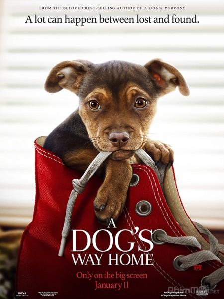 Đường Về Nhà Của Cún Con A Dogs Way Home.Diễn Viên: James Arnold Taylor,Kevin Michael Richardson,Kate Micucci