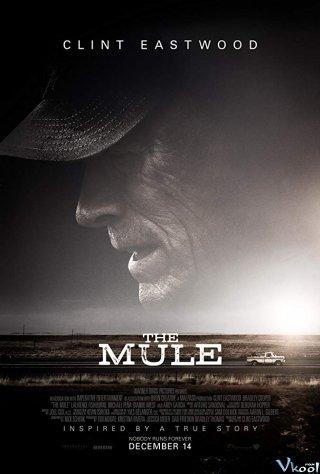Trùm Ma Túy - Già Gân: The Mule