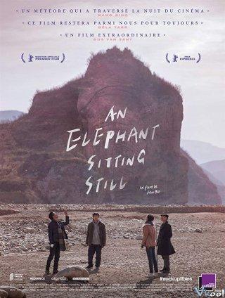 Chú Voi Ngồi Im Trên Đất - An Elephant Sitting Still