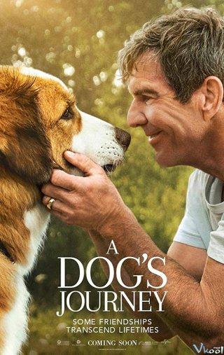 Hành Trình Của Chú Chó Bailey - A Dogs Journey