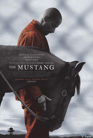 Thuần Hóa The Mustang