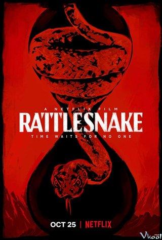 Rắn Đuôi Chuông Rattlesnake