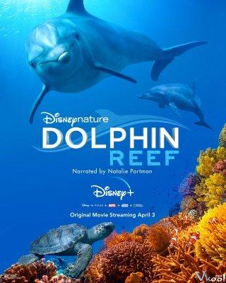 Rạn San Hô Cá Heo - Dolphin Reef