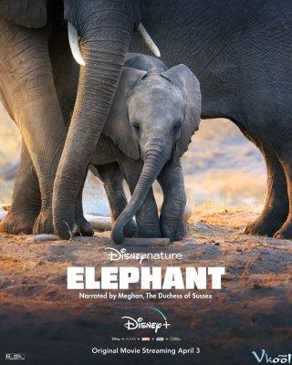 Đàn Voi Châu Phi Elephant