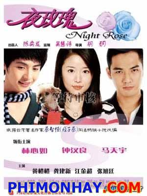 Hoa Hồng Đêm - Night Rose