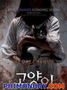 Bí Ẩn Mèo Hoang - Mắt Mèo: Cats