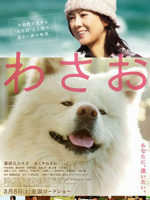 Chú Chó Akita - Wasao