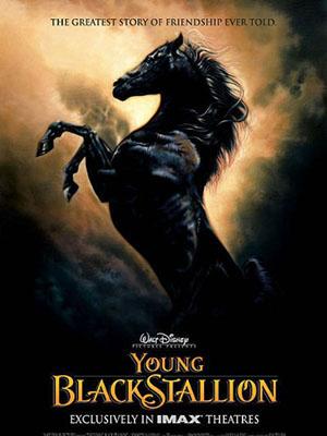 Chú Ngựa Ô Choai The Young Black Stallion.Diễn Viên: Biana Tamimi,Richard Romanus,Patrick Elyas