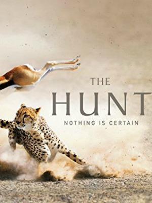 Cuộc Săn Đuổi Phần 1 The Hunt Season 1.Diễn Viên: David Attenborough