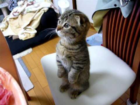 :)) Mèo rình chủ để ăn trộm thịt:))